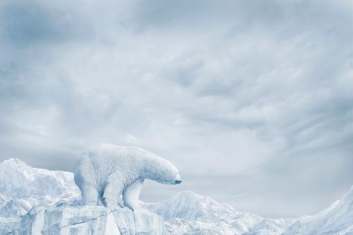 立つ「Polar bear standing on glacier」:スマホ壁紙(13)
