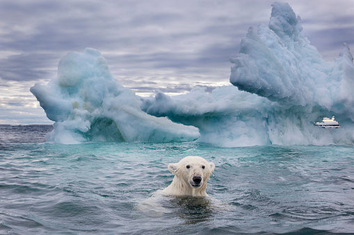 Pack Ice「Polar Bear on Sea Ice near Repulse Bay, Nunavut, Canada」:スマホ壁紙(10)