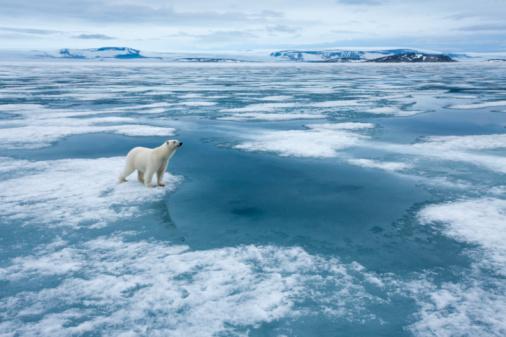Polar Bear「Polar Bear, Nordaustlandet, Svalbard, Norway」:スマホ壁紙(17)