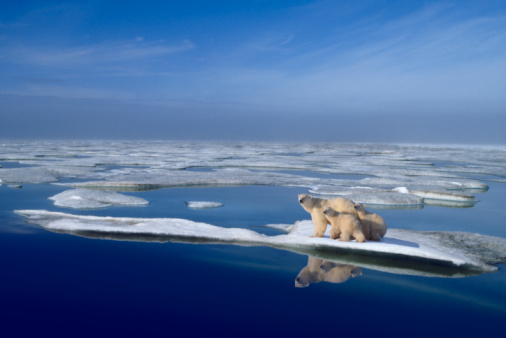 Bear Cub「Polar bear mother (Ursus maritimus) and cubs on ice floe」:スマホ壁紙(11)