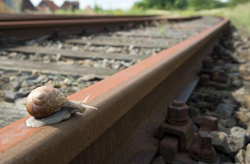 snails「Snail on railway track (XL)」:スマホ壁紙(14)