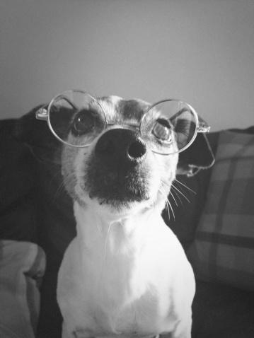 Nerd「Dog with Glasses」:スマホ壁紙(12)
