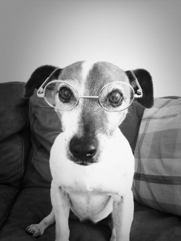 Nerd「Dog with Glasses」:スマホ壁紙(2)