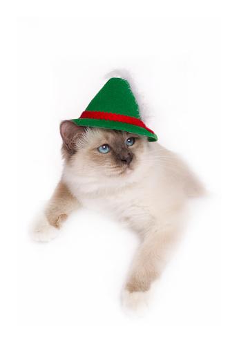 ビルマネコ「Studio shoot of a Birman cat with a hat」:スマホ壁紙(16)