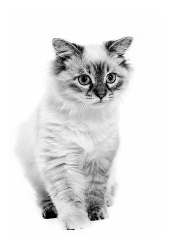 Kitten「Studio shoot of cat, black and white」:スマホ壁紙(8)