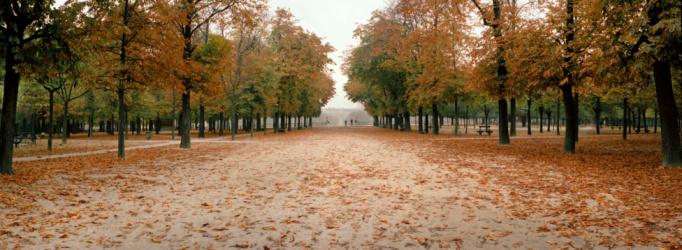 Avenue「City park in autumn」:スマホ壁紙(7)