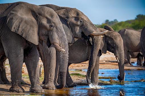 Approaching「right in the middle of an elephant herd, Botswana」:スマホ壁紙(2)