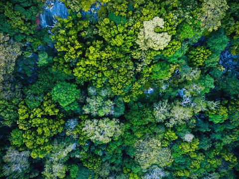 Rainforest「Seychelles, La Digue, Aerial view of rain forest」:スマホ壁紙(7)