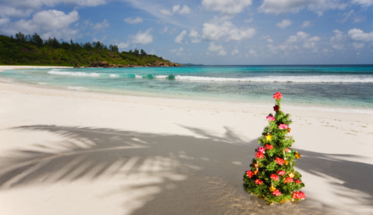 Indian Ocean「Seychelles, Anse Severe, La Digue Island, Christmas tree on beach」:スマホ壁紙(15)