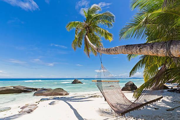 Seychelles, Silhouette Island, Beach La Passe, Presidentel Beach, palm with hammock:スマホ壁紙(壁紙.com)