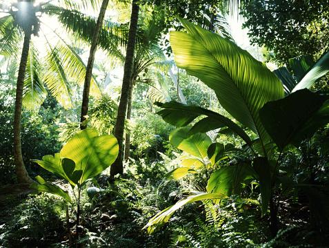 Rainforest「Seychelles, rainforest」:スマホ壁紙(10)
