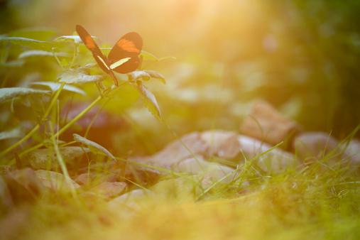 虫・昆虫「バタフライの植物」:スマホ壁紙(18)