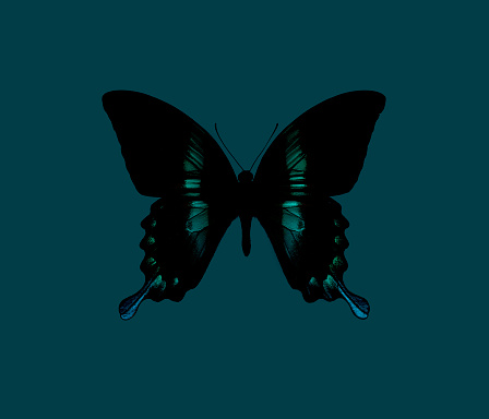 Specimen Holder「Butterfly on turquoise background」:スマホ壁紙(4)