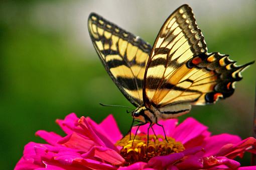 Pollination「butterfly on a flower」:スマホ壁紙(17)