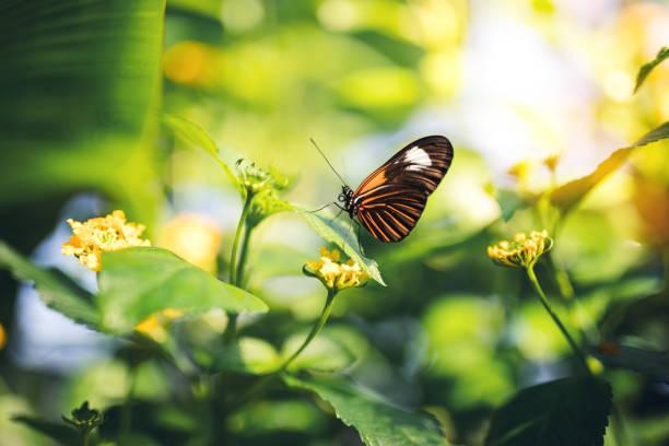 Butterfly On A Flower:スマホ壁紙(壁紙.com)
