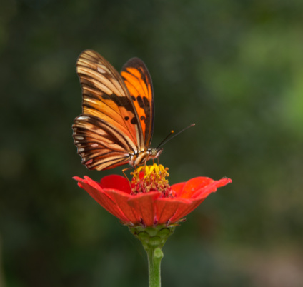 Amazon Rainforest「Butterfly on flower, close-up」:スマホ壁紙(8)