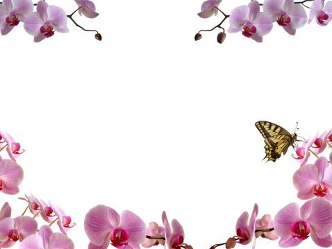 Floral Pattern「Butterfly on orchid window」:スマホ壁紙(0)