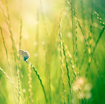 花畑「バタフライのワイルドフラワー」:スマホ壁紙(9)