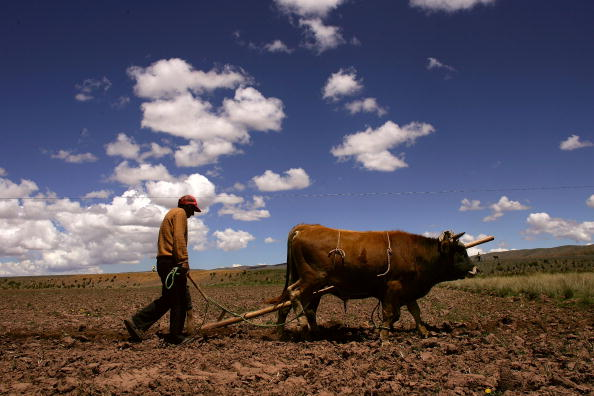 Horizon「Poverty A Force Behind Presidential Race in Bolivia」:写真・画像(2)[壁紙.com]