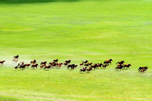 草地「Horses on wide grassy plains of Mongolia」:スマホ壁紙(10)