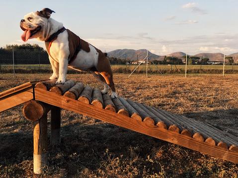 Dog「トップに。」:スマホ壁紙(16)
