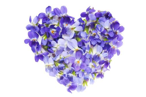 ハート「紫の花の背景に白色」:スマホ壁紙(11)