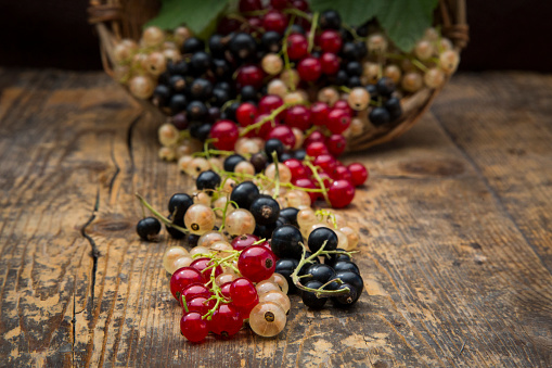Black currant「Black, red and white currants on dark wood」:スマホ壁紙(7)
