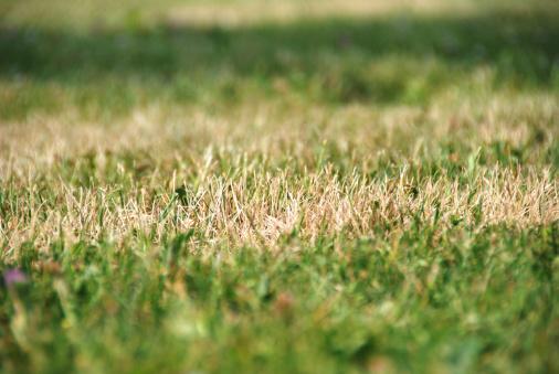 Pasture「dry grass」:スマホ壁紙(0)