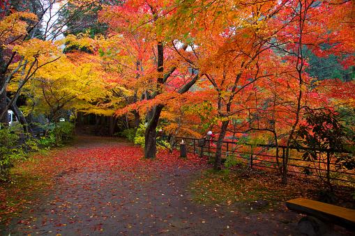 紅葉「Okutsu gorge, Okayama Prefecture, Honshu, Japan」:スマホ壁紙(15)