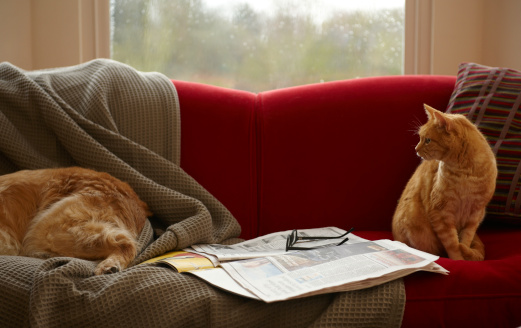 Relaxation「Ginger tabby cat looking at golden retriever sleeping on sofa」:スマホ壁紙(5)