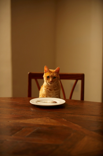 Cat「Ginger tabby cat sitting at dining table with fish in plate」:スマホ壁紙(9)