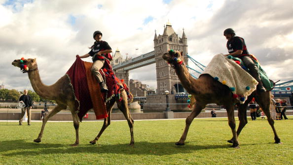 Bestof2009「Camel Racing Comes To The Capital For The First Time」:写真・画像(7)[壁紙.com]