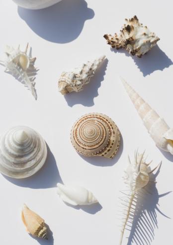 貝殻「Seashells」:スマホ壁紙(3)