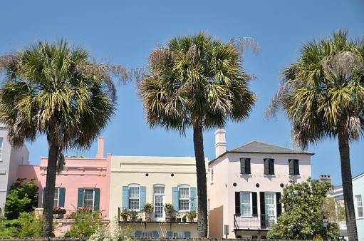 Charleston - South Carolina「Three Palms, Charleston, South Carolina」:スマホ壁紙(3)