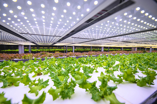 Ecosystem「Vertical Farming Offers a Path Toward a Sustainable Future」:スマホ壁紙(6)