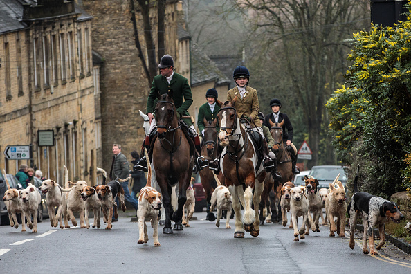 animal「Riders Meet For The Traditional Boxing Day Hunt」:写真・画像(1)[壁紙.com]