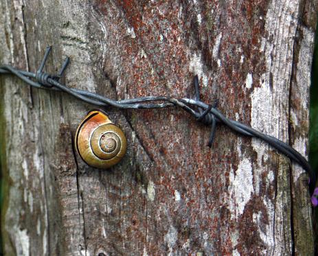 snails「Snail on fence」:スマホ壁紙(2)