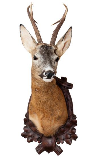 質感「Isolated deer head as decoration」:スマホ壁紙(13)
