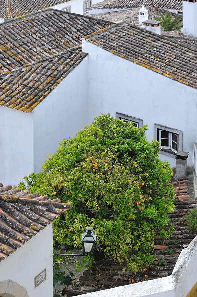 Townhouse「Green Courtyards Of Town Houses In Óbidos」:写真・画像(9)[壁紙.com]