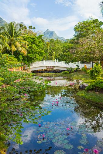 Water Lily「Properity Bridge, Langkawi, Malaysia」:スマホ壁紙(7)