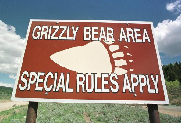 Brown Bear「Grizzly Bear Warnings」:写真・画像(19)[壁紙.com]