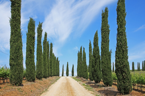 Tuscany「The Way Forward, Cypress Tree」:スマホ壁紙(15)