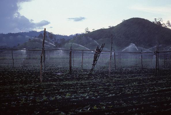 Tobacco Crop「Tobacco plantation」:写真・画像(7)[壁紙.com]