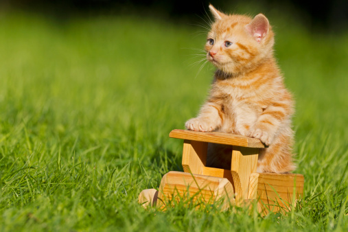Kitten「Germany, Ginger kitten sitting on wooden toy, close up」:スマホ壁紙(11)