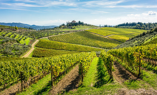 Rolling Landscape「Rolling hills of Tuscan vineyards in the Chianti wine region」:スマホ壁紙(0)
