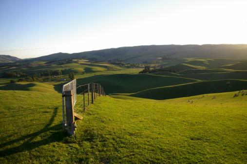 New Zealand「Rolling hill pasture」:スマホ壁紙(11)