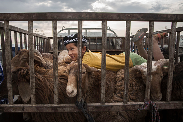Livestock「China's Uyghur Minority Marks Muslim Holiday In Country's Far West」:写真・画像(11)[壁紙.com]