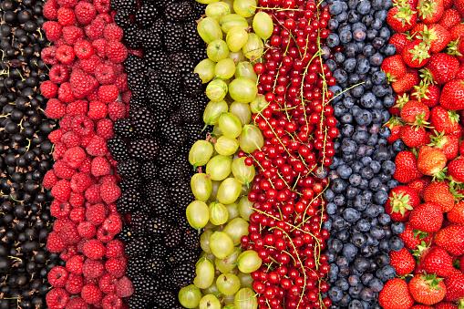 Gooseberry「plenty of different fresh berries in a row」:スマホ壁紙(1)