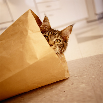 Mischief「Maine coon kitten peeking out of paper bag on kitchen floor」:スマホ壁紙(2)