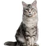 猫壁紙の画像(壁紙.com)